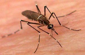 dengue-14