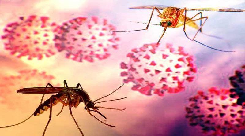 जिनको हो चुका है डेंगू उन पर कोरोना का असर नहीं, रिसर्च में खुलासा