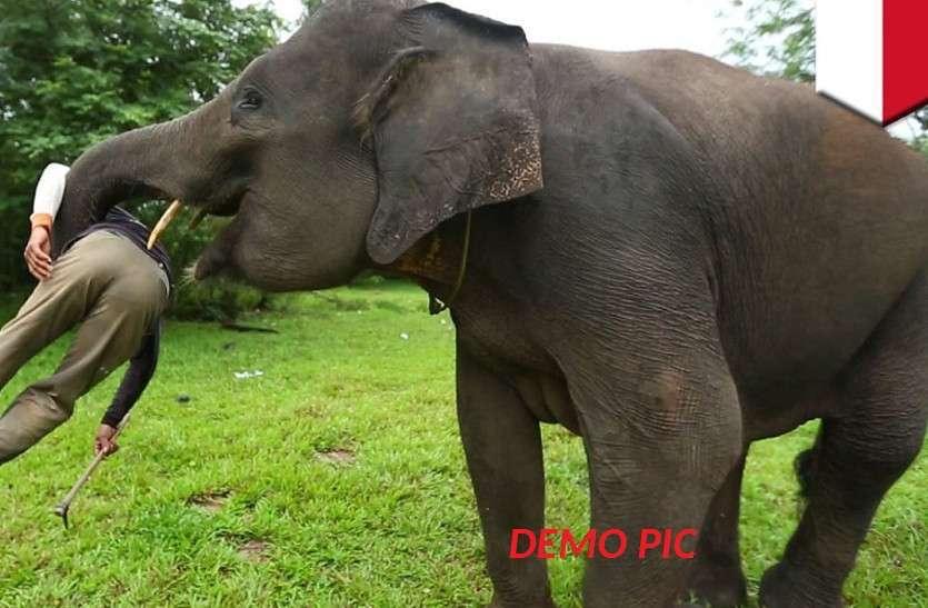 रामनगर में हाथी ने कुचलकर मार डाला