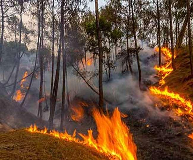 दो माह से धधक रहे हैं जंगल, वन विभाग का फिर भी ' मंगल '