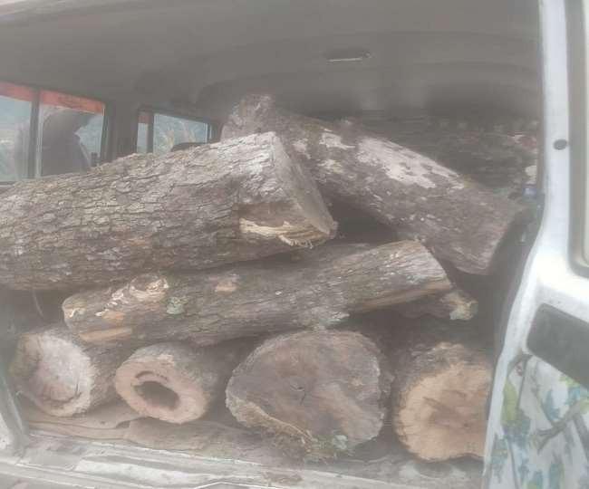 बेतालघाट में बांज-चीड़ के संरक्षित पेड़ तस्करों के निशाने पर