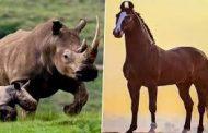 साढ़े पांच करोड़ साल पहले भारत में हुई थी घोड़ों, गैंडों की उत्पत्ति