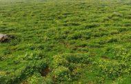 उत्तराखंडः अब पिथौरागढ़ के 'बुग्यालों' में नहीं ठहर सकेंगे देशी-विदेशी सैलानी