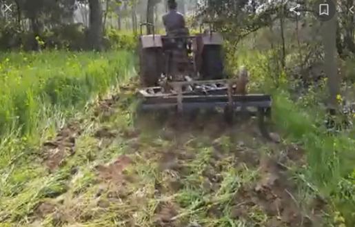 कृषि कानून के विरोध का यह कैसा तरीका? खड़ी फसल को ट्रैक्टर चलाकर नष्ट कर रहे किसान