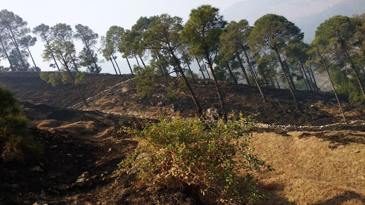 बमटाना,धारी, लेटी के जंगलों में धधकी आग