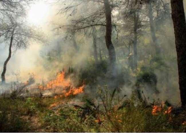 मध्य प्रदेश: बांधवगढ़ टाइगर रिजर्व के जंगलों में भीषण आग, वन्यजीवों पर बड़ा खतरा