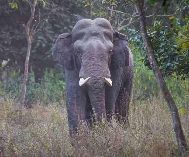 हाथी ने किशोर को पटक-पटक कर मार डाला, वन विभाग ने पटाखे फोड़ भगाया