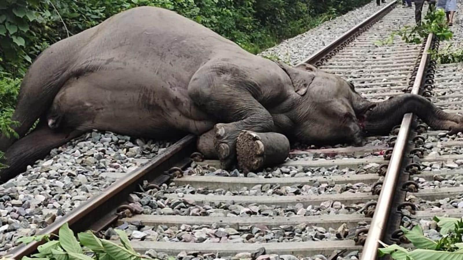 ट्रेन से टकराकर घायल हाथी का शव टांडा में मिला, हड़कंप